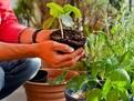 10 legume și fructe pe care le poți crește în balcon