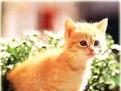 depre pisici, informatii despre feline, originea pisicii, de unde vine pisica