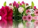 Cele mai indragite flori de catre femei