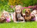 Copiii si animalele de casa,Copiii si animalele de casa, copiii si cateii, copiii si pisicile, de ce are nevoie copilul, copii cu caini, copii cu pisici