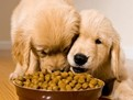 Cum sa alegi mancare sanatoasa pentru cainele tau,hrana uscata pentru caini, hrana super premium pentru caini, crochete pentru caini, ce hrana este buna pentru catelul meu, care este cea mai buna marca de mancare de caini, cea mai buna hrana pentru caini