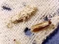 Cum sa scap de molii, cum reduc moliile, infestare cu molii, produse contra moliilor, metode sa scapi de molii, cum sa nu am molii, cum elimin moliile, anti-molii, naftalina, levantica, frunze de nuc, bile de cedru,Cum sa scap de molii, cum reduc moliile,