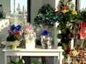 flori potrivite pentru apartament