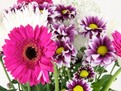 ingrijirea_florilor_in_vaza_400