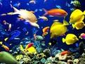 pesti de acvariu, pesti pentru acvariu, acvariu, ingrijire pesti de acvariu