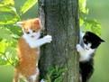 despre pisici, curiozitati le pisicilor, animale de companie, pisica, animal de companie
