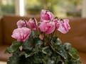 plante_cu_flori_peste_iarna_400