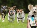 tracker gps animale 3 cele mai utilizate metode de a monitoriza cainii cateii pisicile