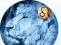 horoscop saptamanal zodia leu