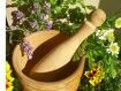cum se folosesc plantele medicinale