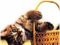 Comportamentul pisicilor