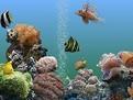 Cum se alege un acvariu
