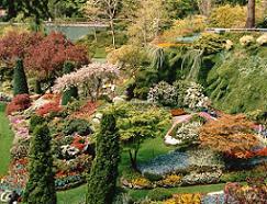 gradina,planta de gradina,flori de gradina,ingrijirea florilor de gradina
