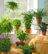 plante si flori de apartament